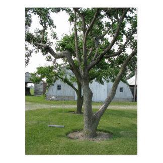 Baum-Schwingen Postkarte