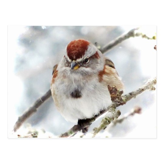 baum spatz im winter postkarte zazzle. Black Bedroom Furniture Sets. Home Design Ideas