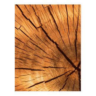 Baum-Stamm-Ringe Postkarte