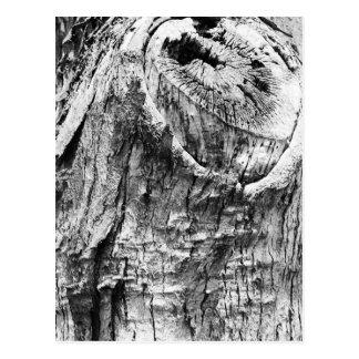 Baum-Stumpf Postkarte