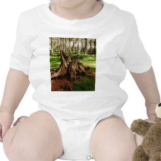 Baum-Stumpf Body