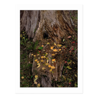 """Baum-Stumpf u. Futter "" Postkarte"