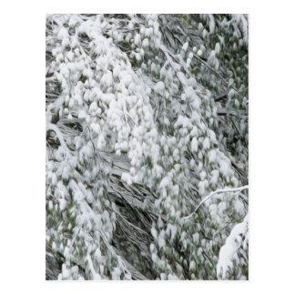 Baumaste nach schweren Schneefällen Postkarte