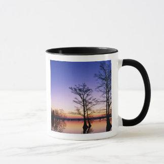 Bäume der kahlen Zypresse silhouettiert am Tasse