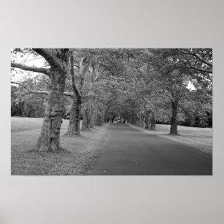 Bäume, die nie Foto-Druck beenden Poster