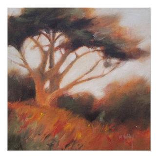 Bäume Kaliforniens Monterey Zypresse Poster