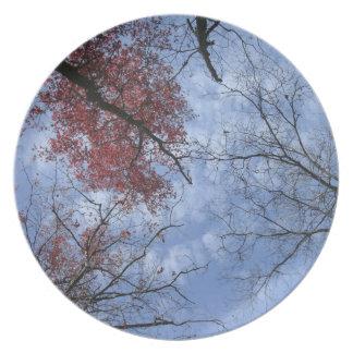 Trees & Sky Rustic