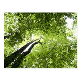 Bäume und Blätter Postkarte