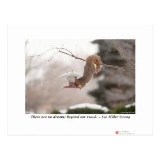 Baumelndes Eichhörnchen-Foto von Lee Hiller Postkarte