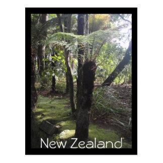 Baumfarne in Neuseeland-Postkarte Postkarte