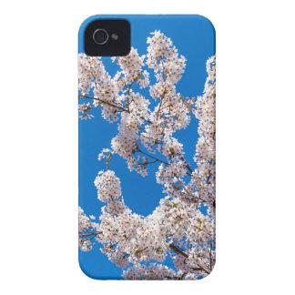 Baumniederlassungen mit blühenden weißen Blumen iPhone 4 Hüllen