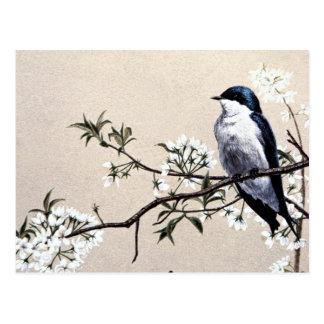 Baumschwalbe Postkarte