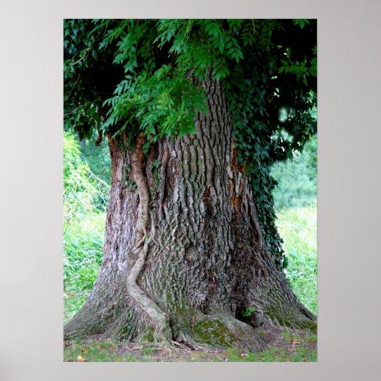 Baumstamm einer Esche, alter Baum mit Blätter, Poster