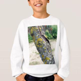 Baumstamm mit gelbem Moospilz Sweatshirt
