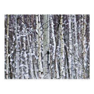 Baumstämme im Winter Postkarte