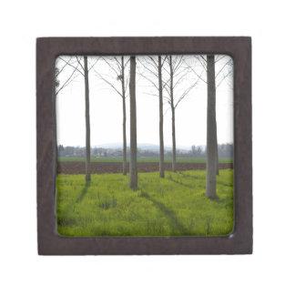 Baumstämme und die französische Landschaft Kiste