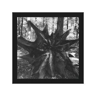Baumstumpf wurzelt Schwarzweiss-Natur-Foto Leinwanddruck