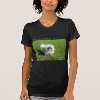 Baumwolle in grass.png T-Shirt