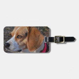 Beagle am Morgen Gepäckanhänger