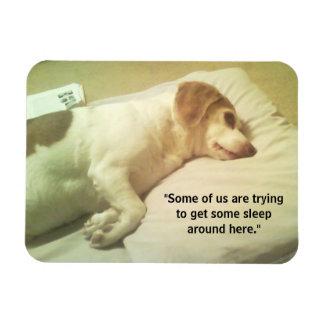 """Beagle-Foto """", das versucht, einigen Schlaf zu Magnet"""