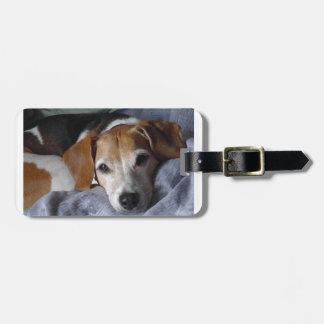 Beagle-Geländeläufer Hund Gepäckanhänger