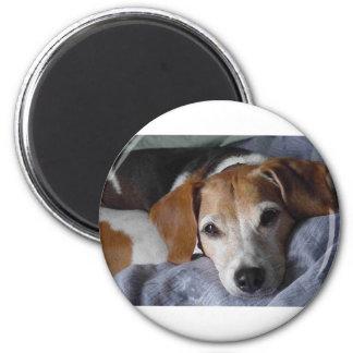 Beagle-Geländeläufer Hund Runder Magnet 5,1 Cm