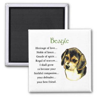 Beagle-Geschenke Quadratischer Magnet