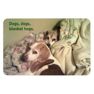 "Beagle-""Hunde, Hunde, umfassende Schweine"" 4x6 Magnet"
