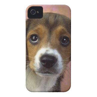 Beagle IPhone 4 Case-Mate iPhone 4 Hüllen