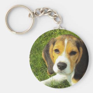 Beagle Keychain Schlüsselanhänger
