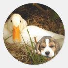 Beagle mit Enten-Aufkleber Runder Aufkleber