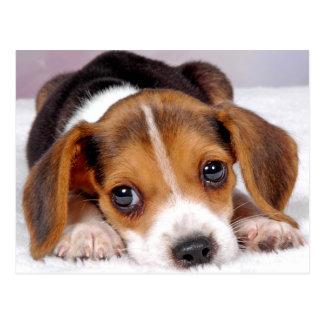 Beagle Postkarte