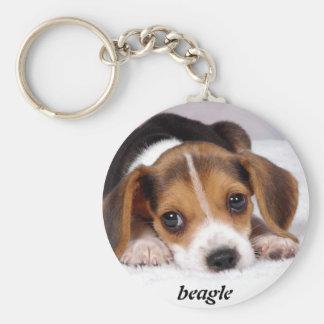 beagle-puppies-wallpaper-11.jpg, Beagle Schlüsselband