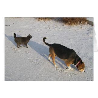 Beagle und russisches Blau in der Karte