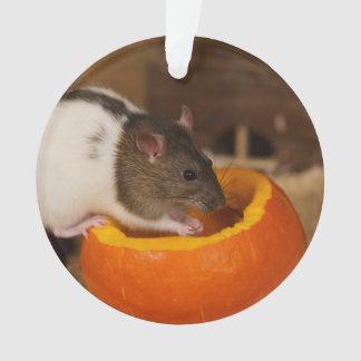 beängstigende schwarze mit Kapuze Ratte, die Ornament