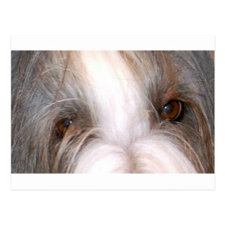 Bearded_collie eyes.png postkarte