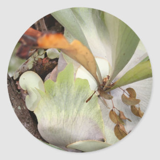 Beauteous Bromeliad Runder Aufkleber