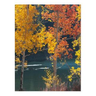 Beaver See (Mesa Seen) im Herbst Postkarte