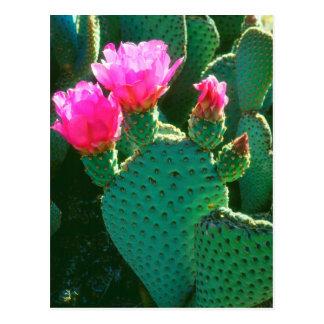 Beavertail Kaktus-Blumen Postkarte