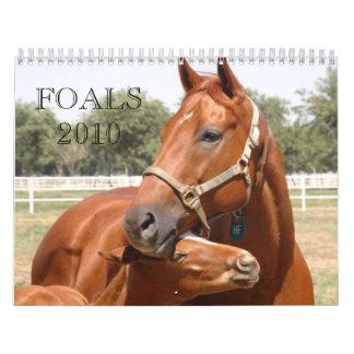bedecken Sie DSC_0118 eine E-Mail, Fohlen 2010, Wandkalender