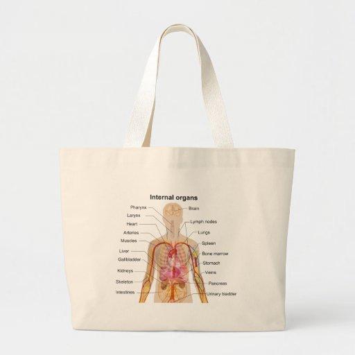 Bedeutende innere organe im menschlicher k rper di for Innere design