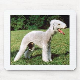 Bedlington Terrier Hund Mousepad