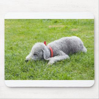 bedlington-Terrier-Schlafen Mauspads