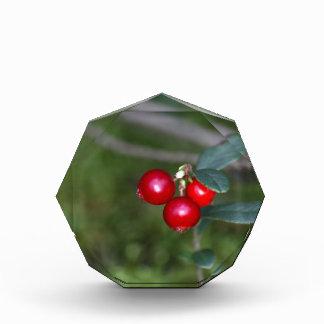 Beeren eines wilden Lingonberry (Vaccinium Auszeichnung