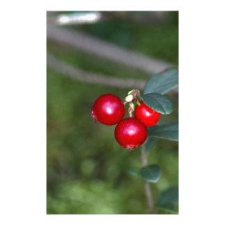 Beeren eines wilden Lingonberry (Vaccinium Briefpapier