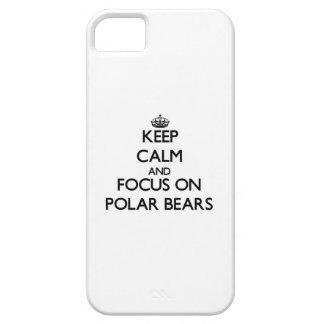 Behalten Sie Ruhe und Fokus auf polaren Bären