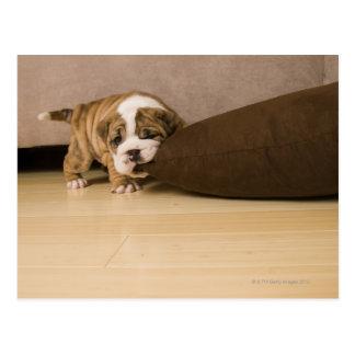 Beißendes Kissen des englischen Bulldoggenwelpen Postkarte