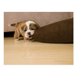 Beißendes Kissen des englischen Bulldoggenwelpen Postkarten