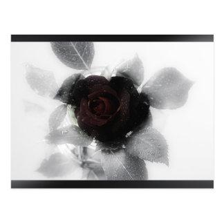 Beklagengedächtnis-Rose Postkarten
