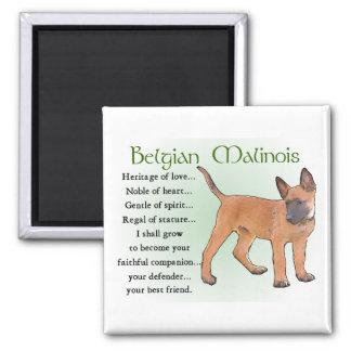 Belgier Malinois Geschenke Quadratischer Magnet